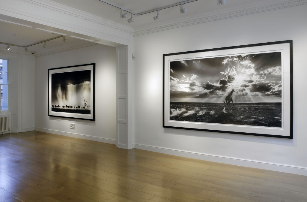 David Yarrow Exhibition at Delahunty 01