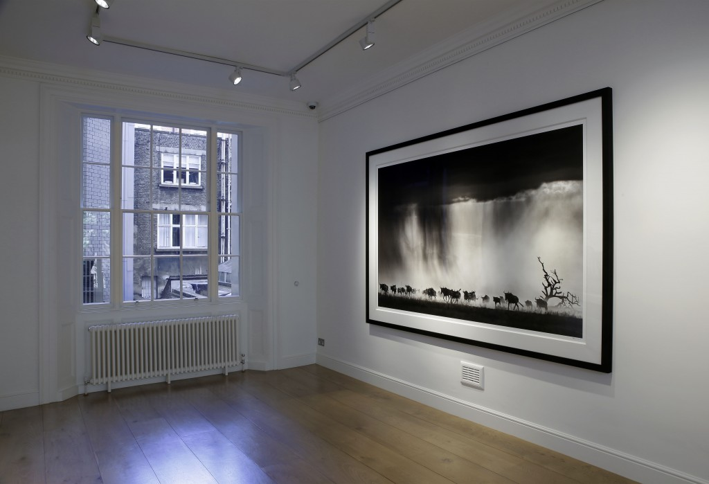 David Yarrow Exhibition at Delahunty 02