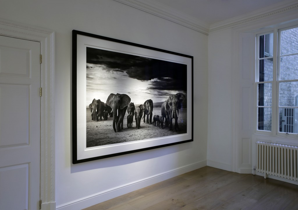 David Yarrow Exhibition at Delahunty 03